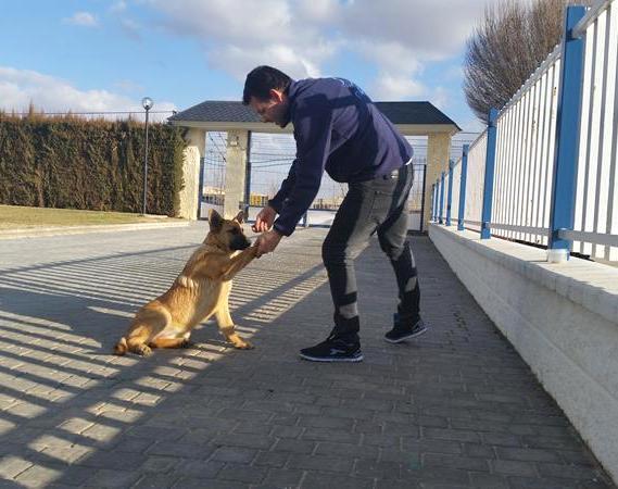Adiestramiento -Residencia canina Ciudad Real (1)
