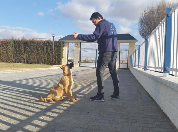 Adiestramiento -Residencia canina Ciudad Real (2)