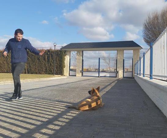 Adiestramiento -Residencia canina Ciudad Real (3)
