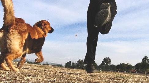 deporte para el perro