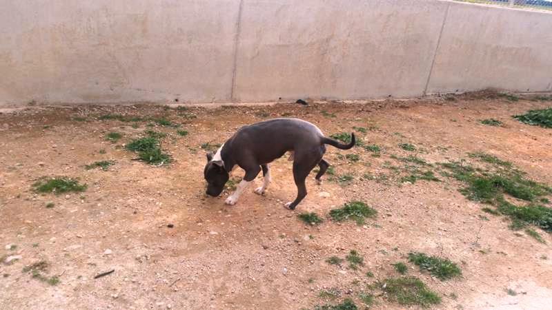 Residencia canina en Argamasilla de Alba
