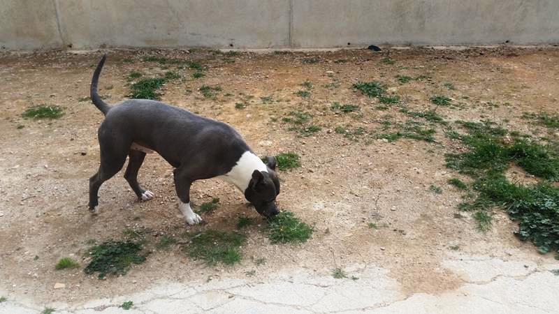 Hotel para perros Argamasilla de Alba